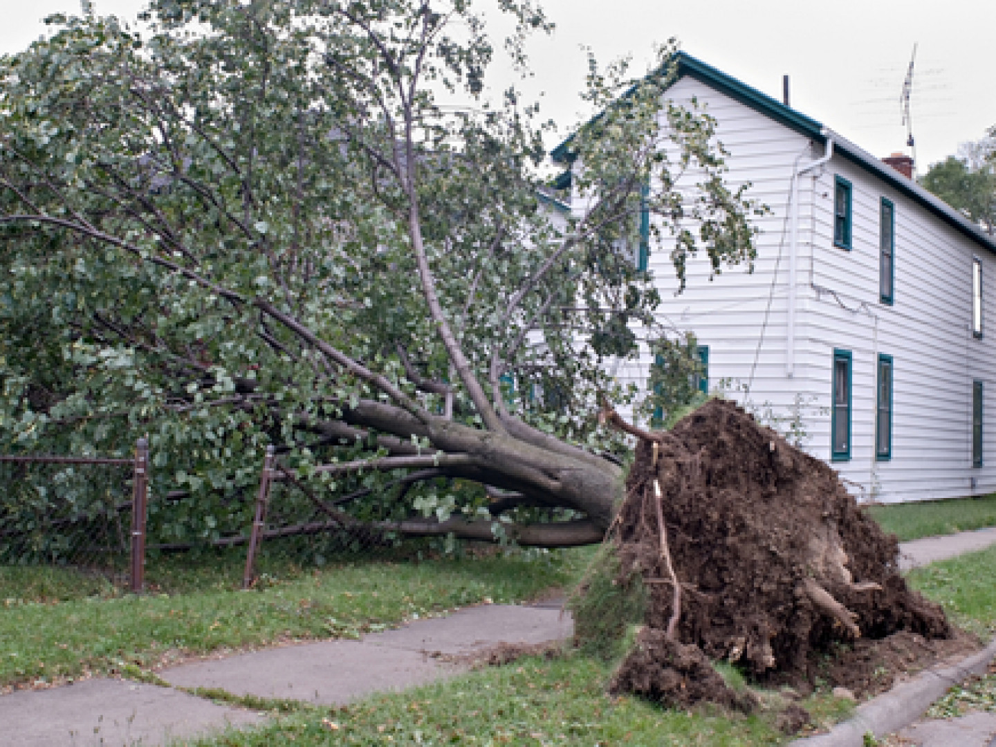 Let Us Handle Your Storm Damage Landscaping